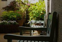 Atholl Crescent Basement / Basement garden ideas