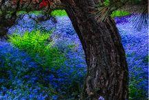 Lovely Nature / Flowers, Gardens, Herbs / by Kathleen Easton