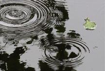 Pond water ripples