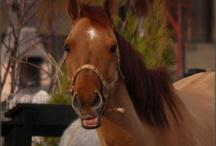 Our horses / The horses at Poveste cu Cai