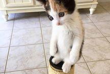 Kitties X