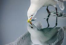 Seagulls&Shells