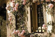 róże zdjęcia