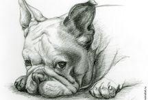 Francia bulldog tetkok