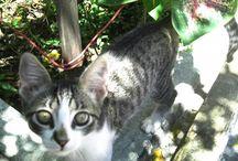 Meu gatinho Zequinha!!!