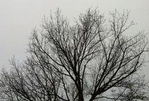Alberi / Rami secchi e nebbia