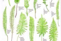 Botanics & Minerals