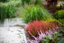 garden / by Nicole Stewart