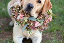 Amiguinhos à rigor / Wedding Pets
