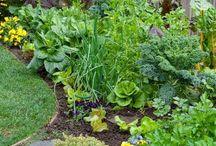 liten grønnsakshage