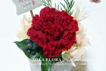 sola flora