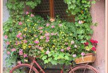 Bikes & Flowers ⚘