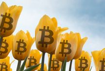 """Why Bitcoin Exceeding """"Tulip Mania"""" Levels Doesn't Matter"""