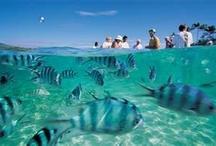 Fiji !! / Holiday December 14'