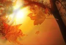 ~Autumn~