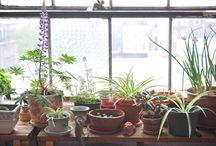 Indoor Garden / by Jessica H