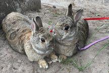 Mijn konijnen