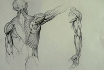 Anatomy - Back