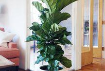 office plants interier