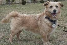 Zwierzaki do adopcji / Pomóż nam pomagać
