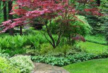 My new big garden! / by Jo Gordon
