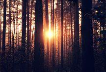 trees / by Rachel Allen