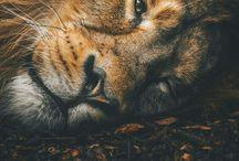 Majesty.
