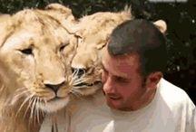 LöwenLiebe (Video)