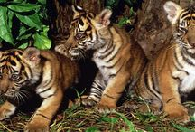 Tropical Rainforest Heritage of Sumatera-Indonesia