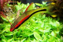 My Nature Aquarium World / Aquarium & Aquascaping