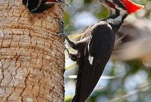 """We have a few """"adolescent"""" Pileated Woodpeckers who dine with us. They are too cute!"""