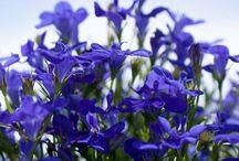 květiny do truhlíku