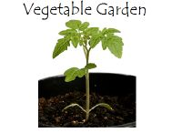 Growing my own vege