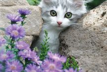 Animal loves<3