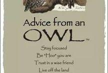 Owls & co.