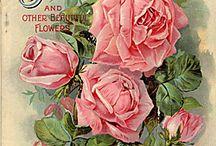 Vintage Botanicals / by Kellie Fortin