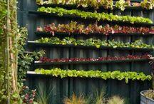 Vertical Gardens and Farms