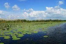 Delta Dunarii / De ce este minunata Delta Dunarii?