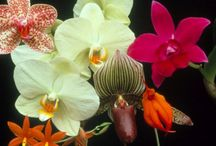 Ornamental Plants / by FairyLandscape