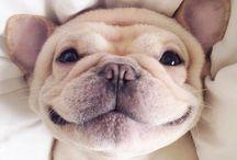 puppies♡