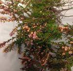 Blomsterliste mark blomster/potteplanter / norsk navn og botanisk navn på mark blomster.  + litt stell.  Når du skal stelle disse blomstene er det viktig å ta bort visne blader og vanne den minst en gang i uken.