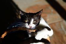 Ayudando a Difusion Felina Pontevedra