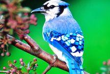Mr Birdies