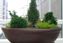 zelen zahrada
