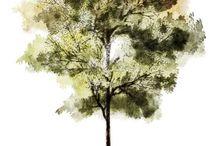 Busker og Trær