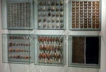 Museum design ideas