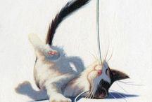 Laser Cat Contenders