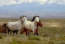 horses / by Merry Peak