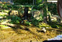 アンクルペペの庭