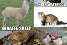 Morsomme dyr